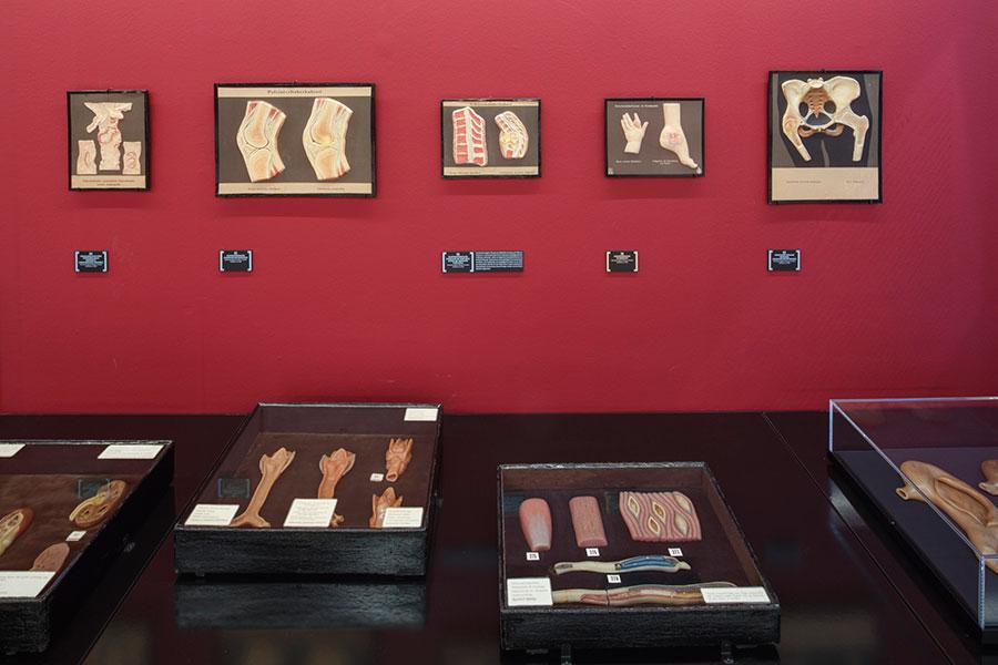 Anatomical Waxwork Cabinet