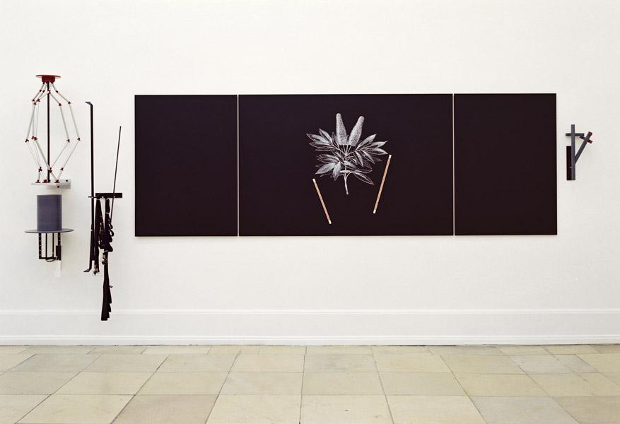 African Plant, 1991 © Zvi Goldstein
